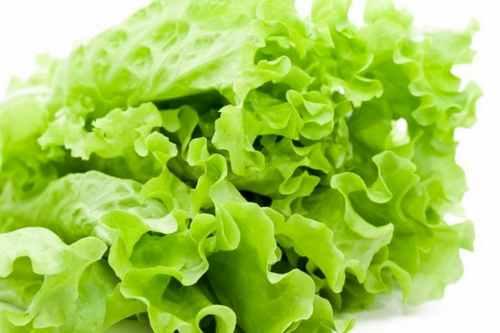 Рецептура блюда Салат зеленый